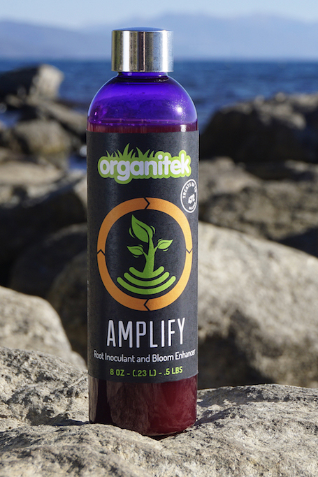 Amplify 8oz bottle